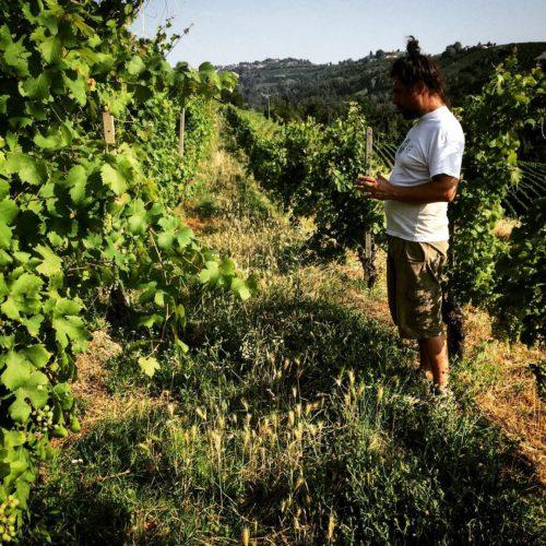 Fabio im Weingarten