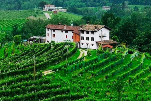 Weingut Ca' dei Zago