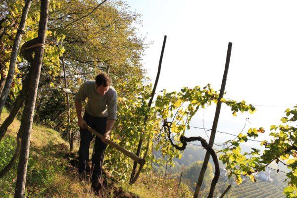 Zago Weingartenarbeit