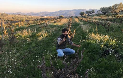 Ruben im Weingarten