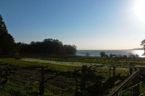 Weingarten am Meer 1