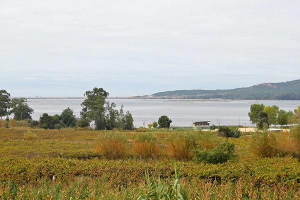 Weingarten am Meer 2