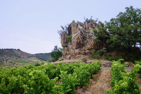 Cyril Fhal, Clos du Rouge Gorge