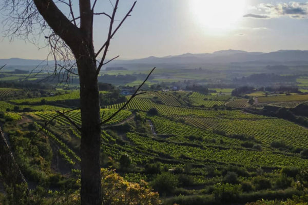 Ausblick Weingarten