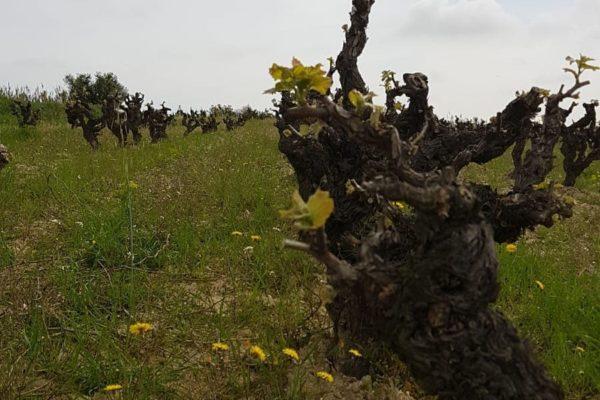 Weingarten Clandestina 4